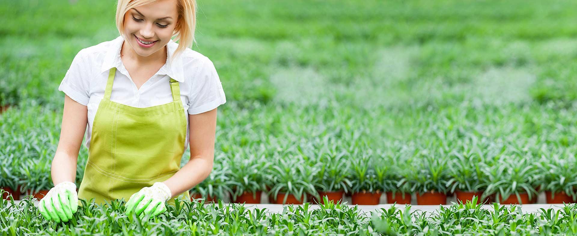 Gardeners Downham